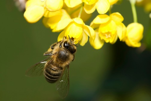 Infographic: When bee stings call for 911